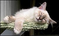 Baggis sover sött